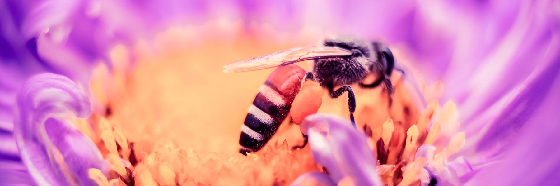 Pest control and prevention of wasps
